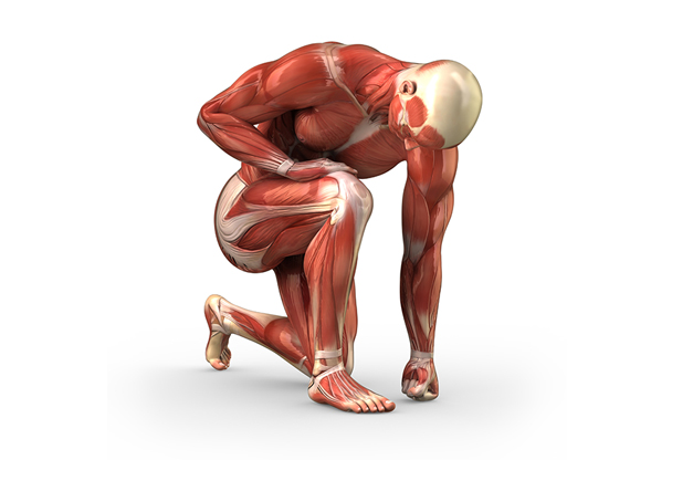 Osteopathy treats all tissues and joints of the body: muscle, bone, tendon, ligament, fascia.
